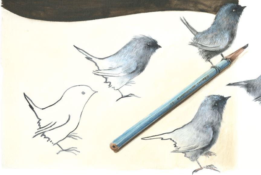 Pássaros de desenho se transformando em reais. Página 12 do livro Como nascem os pássaros azuis. Imagem ilustrativa texto livro de imagem.